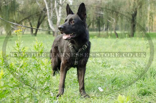 Protection Dog Harness for German Shepherd Training