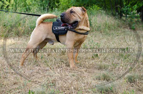 Bestseller! Reflective Dog Harness for Shar Pei of Nylon