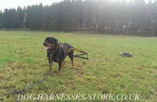 Weight Pulling Harness for Rottweiler