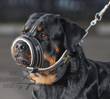 Padded Anti Bark Muzzle