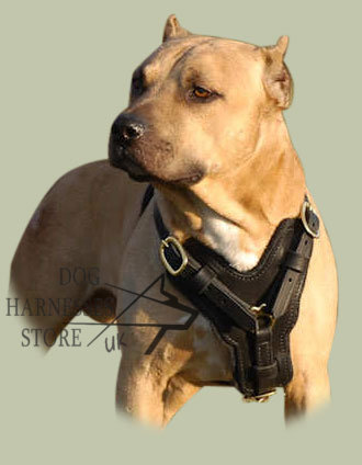 Padded Dog Harness UK