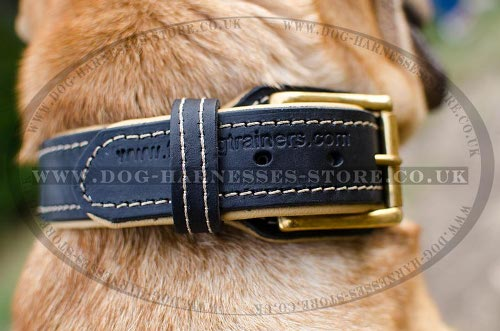 Shar-Pei Collar of Nappa Padded Leather for Reliable Control