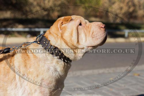 Shar-Pei Collar Handmade, Genuine Leather with Spikes and Studs