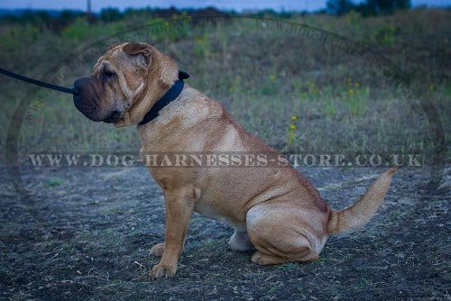 Shar-Pei Dog Collar Leather of Classic Design for Everyday Use