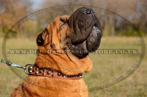 Shar-Pei Dog Collar Leather with Cones and Studs, Modern Design
