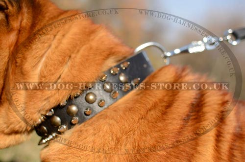 Shar-Pei Dog Collar of Strong Leather with Spikes and Studs