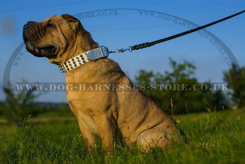 Shar-Pei Dog Collar of White Leather with Cones and Spikes