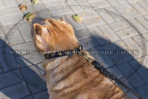 Shar-Pei Puppy Collar of Leather for Safe and Stylish Walking