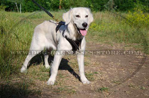 soft dog harness uk for golden retriever puppy