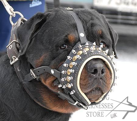 Padded Dog Muzzle on Dog