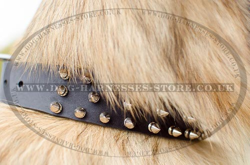 Tervuren Collar with Three Rows of Shiny Nickel Spikes, Leather