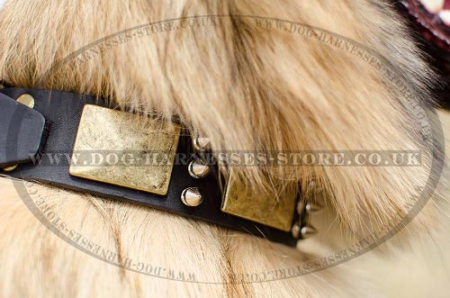 Tervuren Collar of Antique Design, Leather with Plates & Spikes