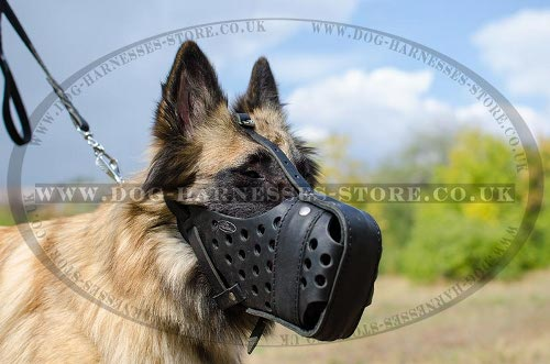 Tervuren Muzzle for Attack Training, Strong Leather - Click Image to Close