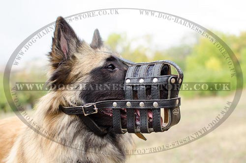 Tervuren Muzzle, Mesh Design, Quality Leather and Nappa Padding