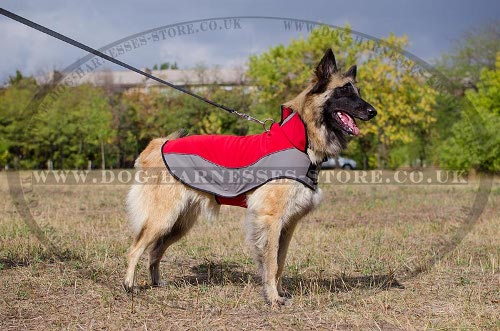 Warm Dog Coat for Belgian Tervuren Shepherd Walking
