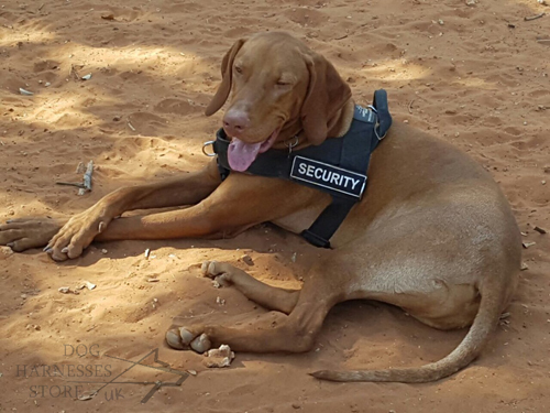Bestseller! Functional Working Dog Harness for Hungarian Vizsla