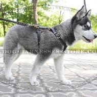 Leash for Husky Puppy of Genuine Leather with Braided Details