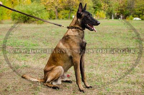 Malinois Collars for Dogs