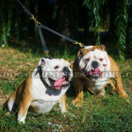 Solid Leather Coupler Leash for Two Bulldogs Easy Walking