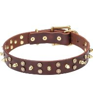 Leather Dog Collar Studded with Stars and Spikes of Goldy Brass