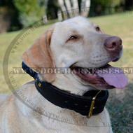 Labrador Dog Collar