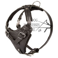 Leather Dog Harness with Handle UK for Protection Dogs Training!