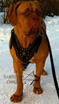 Dogue de Bordeaux Designer Studded Leather Harness