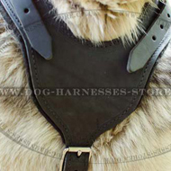 Padded Leather Working Dog Harness for Alaskan Malamute