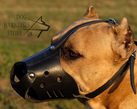 Lined Leather Dog Muzzle
