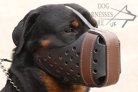 Dog Training Muzzles
