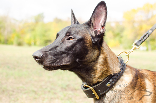Malinois Training
