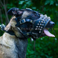 Malinois Muzzle Open Mouth Nappa Lined and Decorated