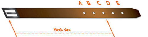 How to Measure Dog for Buckle Dog Collar