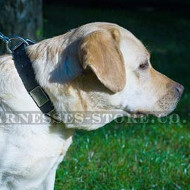 Metal Buckle Dog Collar of Thick Leather with Nickel Plates
