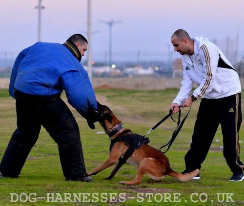 Attack Dog Training According Mondioring System