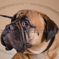 Bullmastiff ID Name Tag Leather Collar, UK