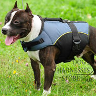Dog Harness Vest for Staffy, Soft Padded for Warming and Support