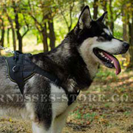 Nylon Dog Harness for Alaskan Malamute Sport