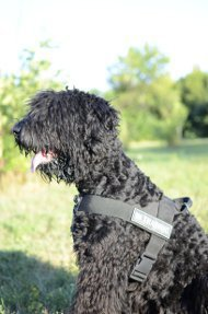 Nylon Dog Harness UK for Black Russian Terrier or Schnauzer!