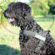 Best Nylon Dog Harness