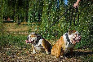 Best Dog Leads UK