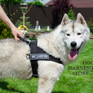 Nylon Dog Harness for Husky Training UK