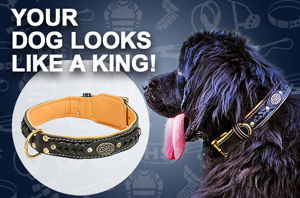 Buy Dog Collar UK