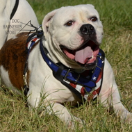 "Padded Dog Harness of Natural Leather ""American Flag"""