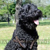 Black Russian Terrier Padded Leather Harness for Tracking UK