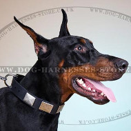 Plated Dog Collar with Nickel Hardware of Thick Leather Strap