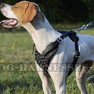 Pointer Dog Harness with Spiked Chest Plate, Genuine Leather