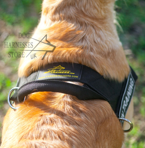 Labrador Dog Harness UK Nylon
