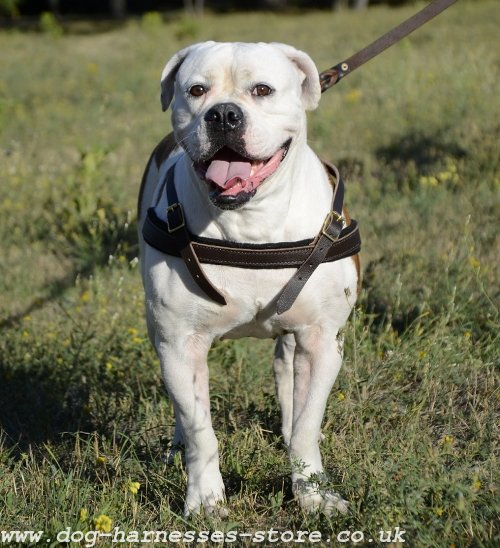 Stop Pulling Dog Harness UK