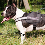 Reflective Dog Harness of Nylon for Staffy Training and Working